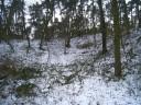 Hügelwald
